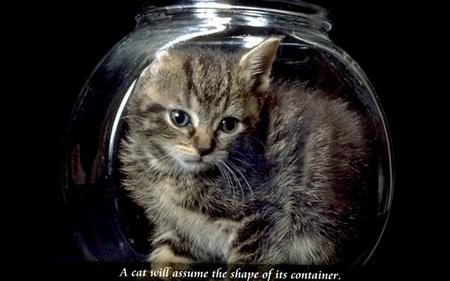 Cats and Quotes 3.0 Screensaver